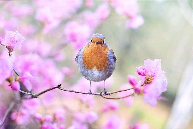 我慢や迷いがない鳥
