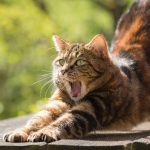 ストレッチをする健康な猫