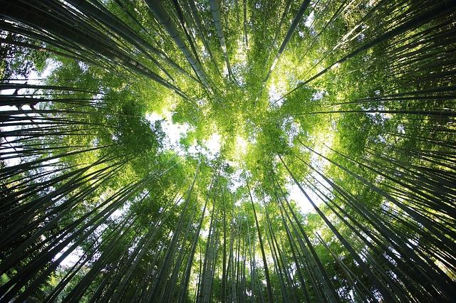 二酸化炭素を入れて、酸素を出す植物