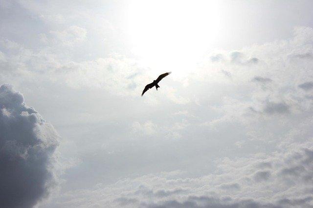 自由に飛ぶ鳥